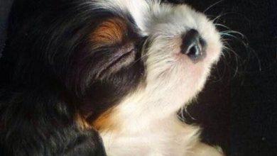 Hundebilder Kostenlos 390x220 - Hundebilder Kostenlos