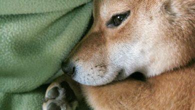 Hundebilder Kostenlos Für Facebook 390x220 - Hundebilder Kostenlos Für Facebook