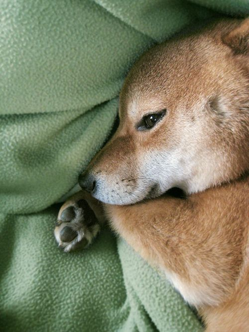 Hundebilder Kostenlos Für Facebook - Hundebilder Kostenlos Für Facebook