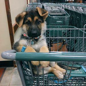 Hundebilder Kostenlos Kostenlos 300x300 - Hundebilder Kostenlos Kostenlos