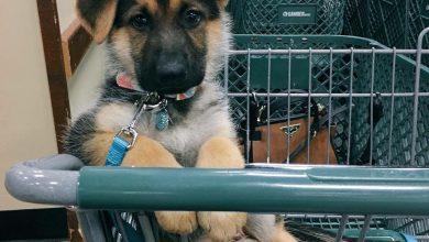 Hundebilder Kostenlos Kostenlos 390x220 - Hundebilder Kostenlos Kostenlos