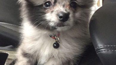 Hundebilder Kostenlos Kostenlos Herunterladen 390x220 - Hundebilder Kostenlos Kostenlos Herunterladen