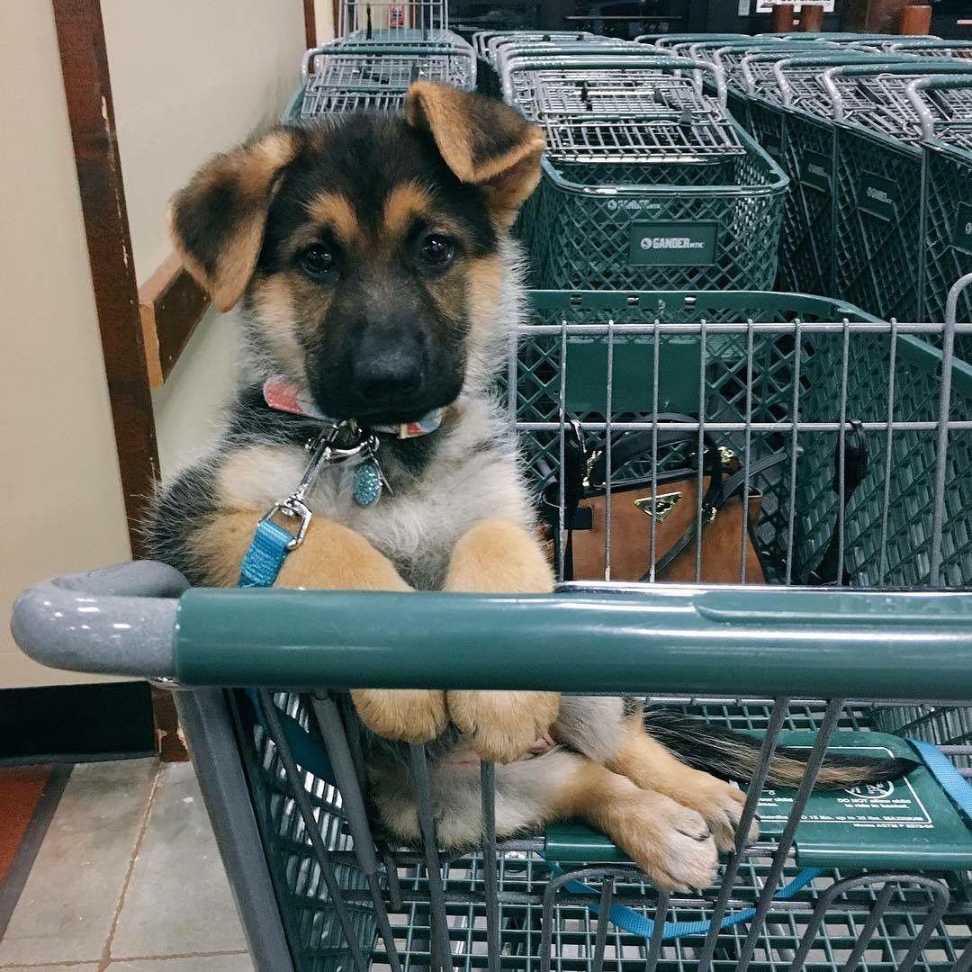 Hundebilder Kostenlos Kostenlos - Hundebilder Kostenlos Kostenlos