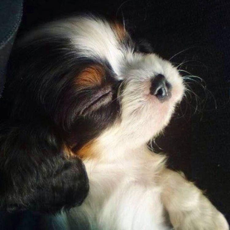 Hundebilder Kostenlos - Hundebilder Kostenlos