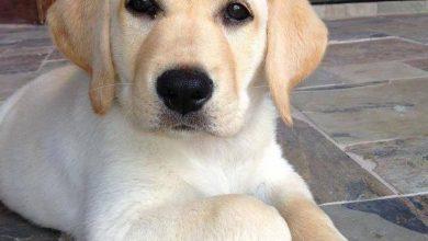 Hundebilder Mit Namen 390x220 - Hundebilder Mit Namen