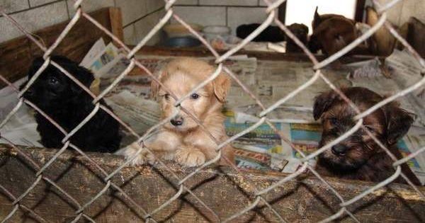 Hundebilder Mit Namen Für Facebook - Hundebilder Mit Namen Für Facebook