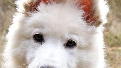 Hundebilder Mit Sprüchen 390x220 - Hundebilder Mit Sprüchen