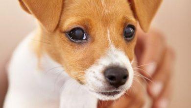 Hundebilder Mit Sprüchen Für Whatsapp 390x220 - Hundebilder Mit Sprüchen Für Whatsapp