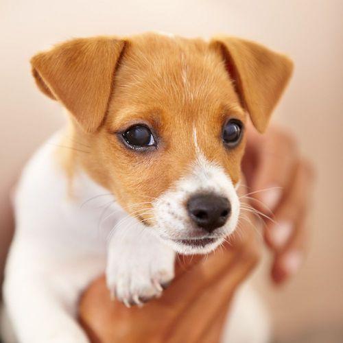 Hundebilder Mit Sprüchen Für Whatsapp - Hundebilder Mit Sprüchen Für Whatsapp