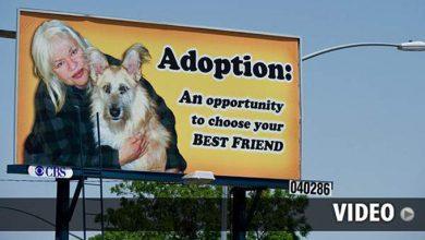 Hundebilder Mit Sprüchen Kostenlos 390x220 - Hundebilder Mit Sprüchen Kostenlos
