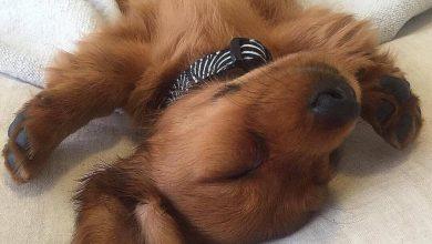 Hundebilder Mit Sprüchen Kostenlos Herunterladen 390x220 - Hundebilder Mit Sprüchen Kostenlos Herunterladen