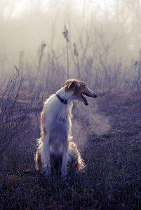 Hundebilder Mit Spruch 201x300 - Hundebilder Mit Spruch