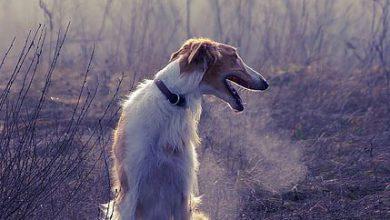Hundebilder Mit Spruch 390x220 - Hundebilder Mit Spruch