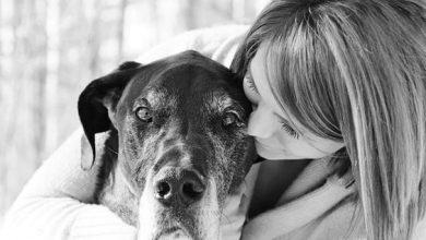 Hundebilder Mit Spruch Für Facebook 390x220 - Hundebilder Mit Spruch Für Facebook