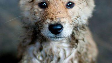 Hundebilder Mit Spruch Kostenlos 390x220 - Hundebilder Mit Spruch Kostenlos