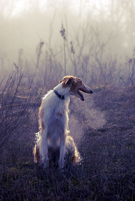 Hundebilder Mit Spruch - Hundebilder Mit Spruch