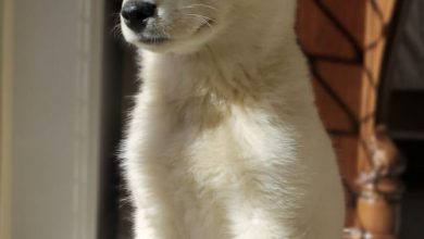 Hundebilder Welpen Für Facebook 390x220 - Hundebilder Welpen Für Facebook