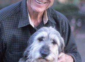 Hundebilder Zum Ausdrucken Kostenlos 300x220 - Hundebilder Zum Ausdrucken Kostenlos