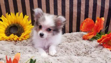 Hundebilder Zum Ausdrucken Kostenlos Für Facebook 390x220 - Hundebilder Zum Ausdrucken Kostenlos Für Facebook