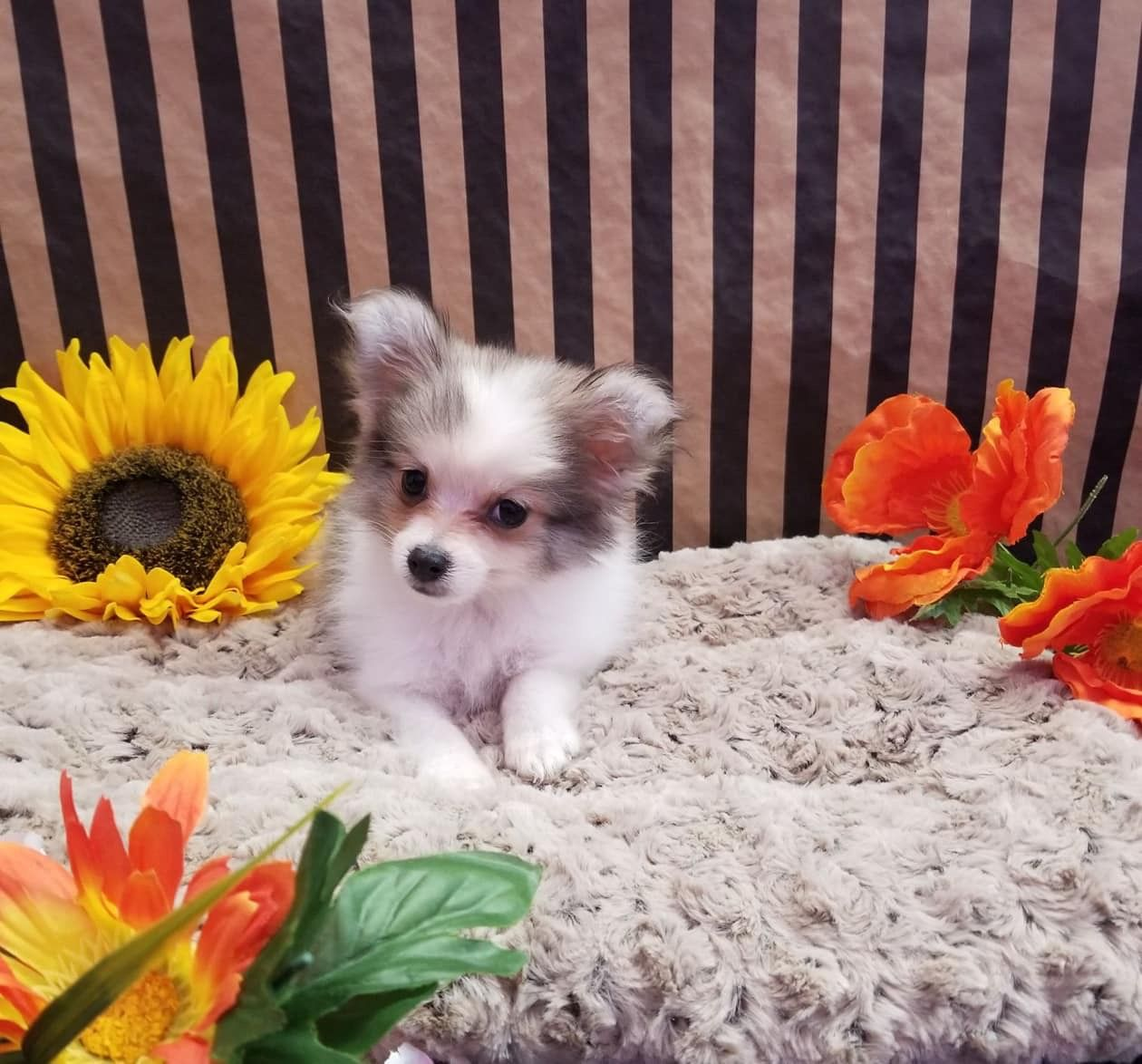 Hundebilder Zum Ausdrucken Kostenlos Für Facebook - Hundebilder Zum Ausdrucken Kostenlos Für Facebook