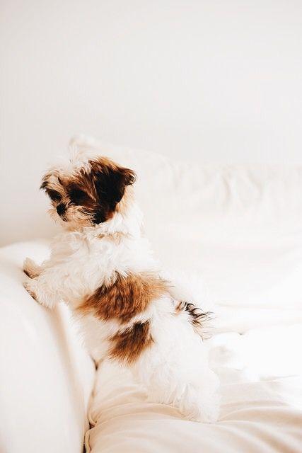 Hundebilder - Hundebilder