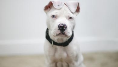 Hundefotos Zum Ausdrucken 390x220 - Hundefotos Zum Ausdrucken