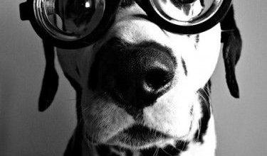 Hundeköpfe Bilder Kostenlos Herunterladen 375x220 - Hundeköpfe Bilder Kostenlos Herunterladen