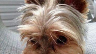 Hundekrankheiten Bilder Für Facebook 390x220 - Hundekrankheiten Bilder Für Facebook