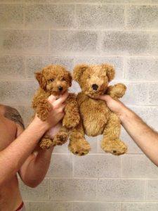Hundekrankheiten Bilder Für Whatsapp 225x300 - Hundekrankheiten Bilder Für Whatsapp