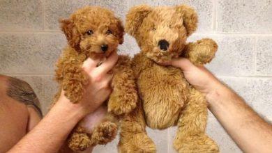 Hundekrankheiten Bilder Für Whatsapp 390x220 - Hundekrankheiten Bilder Für Whatsapp