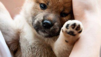 Hundekrankheiten Bilder Kostenlos 390x220 - Hundekrankheiten Bilder Kostenlos
