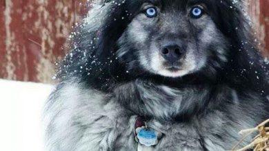 Hundekrankheiten Bilder Kostenlos Herunterladen 390x220 - Hundekrankheiten Bilder Kostenlos Herunterladen