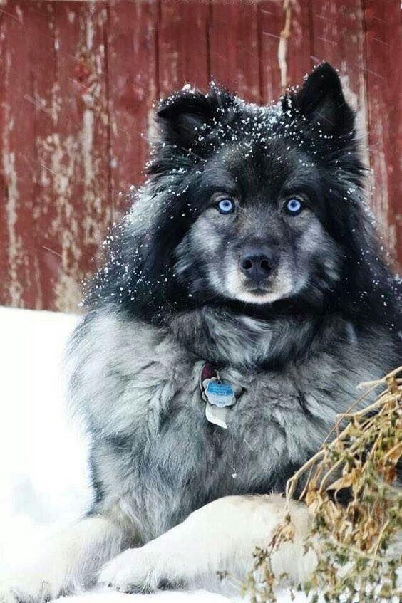 Hundekrankheiten Bilder Kostenlos Herunterladen - Hundekrankheiten Bilder Kostenlos Herunterladen