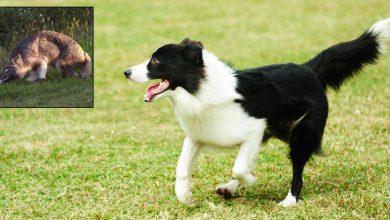 Hundepfoten Bilder Für Facebook 390x220 - Hundepfoten Bilder Für Facebook