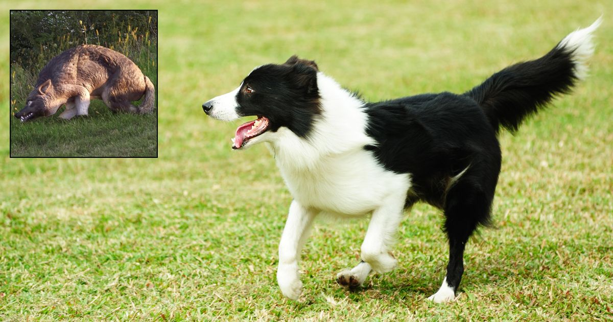 Hundepfoten Bilder Für Facebook - Hundepfoten Bilder Für Facebook