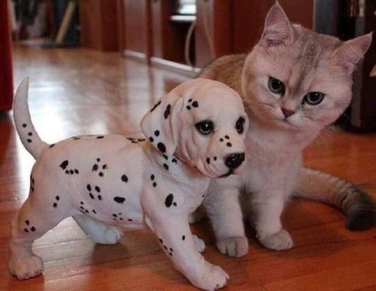 malvorlagen hundepfoten  färben sie das bild