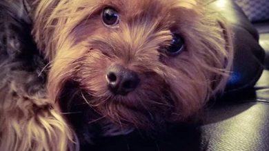 Hundepfoten Bilder Kostenlos 390x220 - Hundepfoten Bilder Kostenlos