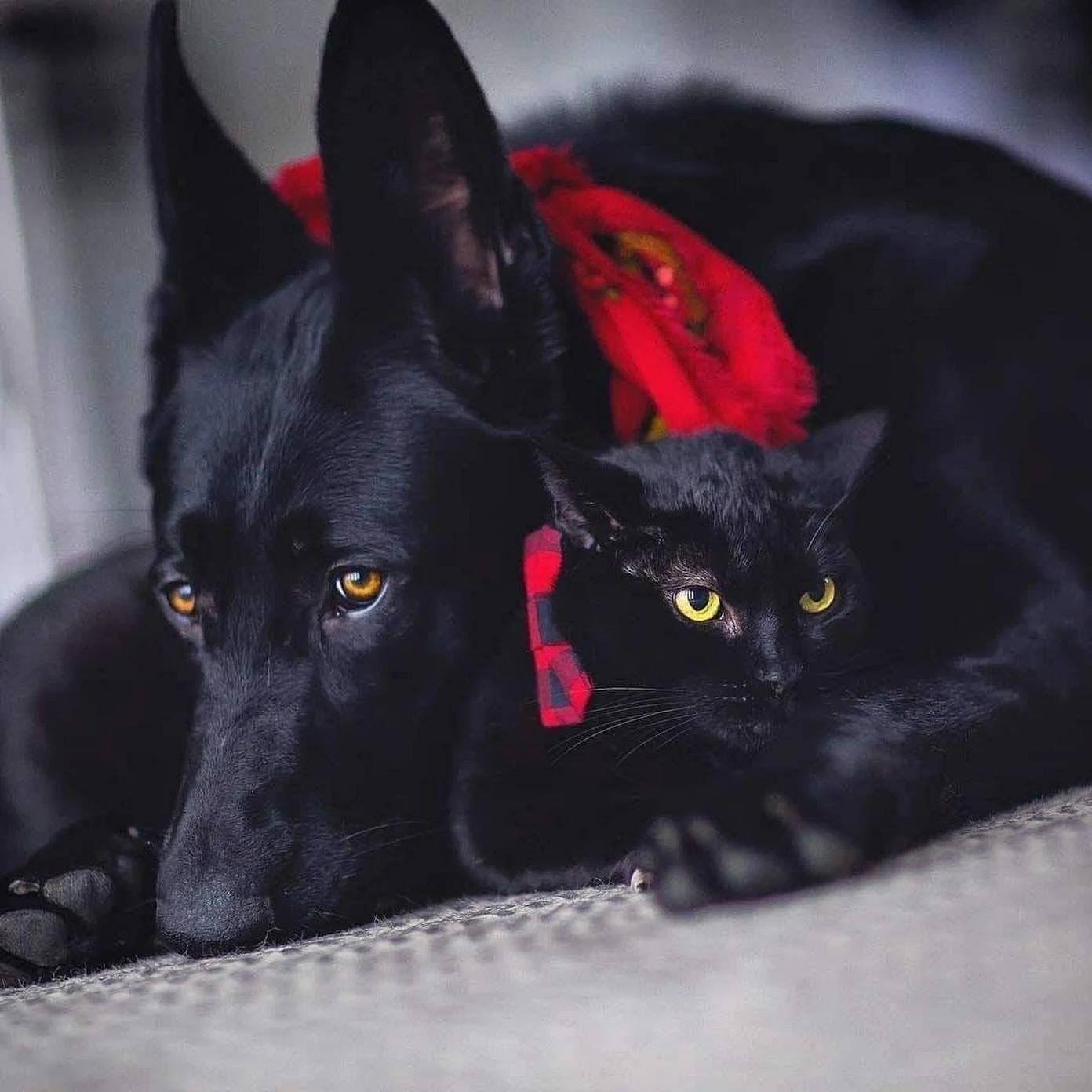 Hunderasse Ähnlich Pudel - Hunderasse Ähnlich Pudel