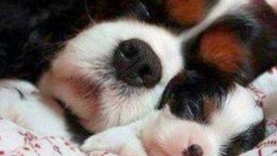 Hunderasse Klein Weiß 390x220 - Hunderasse Klein Weiß