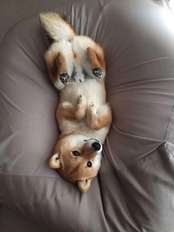 Hunderassen Übersicht Mit Bild - Hunderassen Übersicht Mit Bild