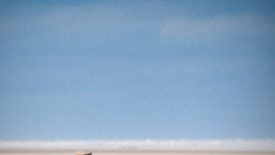 Hunderassen Übersicht Nach Größe 390x220 - Hunderassen Übersicht Nach Größe