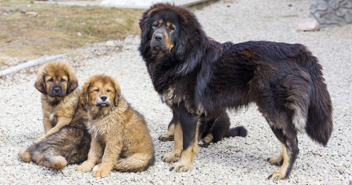 Hunderassen Aus Aller Welt - Hunderassen Aus Aller Welt