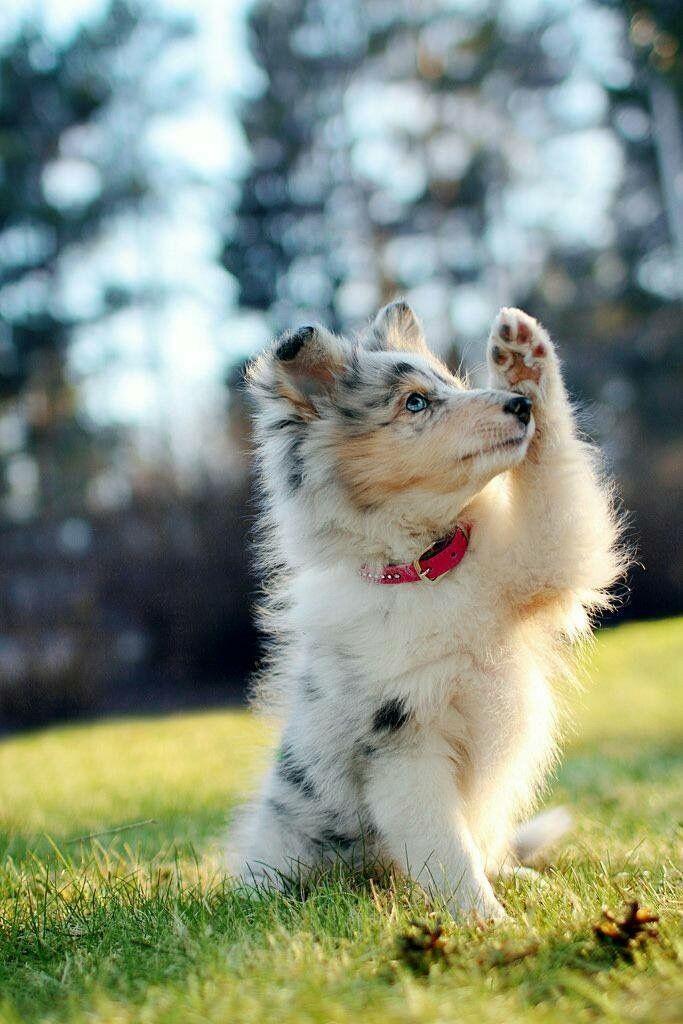 Hunderassen Bilder Übersicht - Hunderassen Bilder Übersicht
