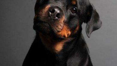 Hunderassen Bilder Fotos Für Facebook 390x220 - Hunderassen Bilder Fotos Für Facebook