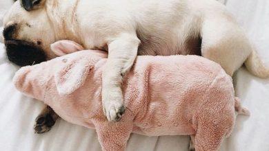 Hunderassen Bilder Kleine Hunde Für Facebook 390x220 - Hunderassen Bilder Kleine Hunde Für Facebook
