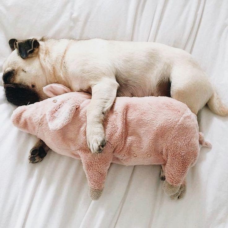 Hunderassen Bilder Kleine Hunde Für Facebook - Hunderassen Bilder Kleine Hunde Für Facebook