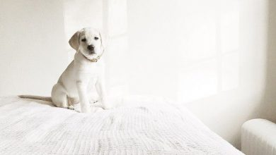 Hunderassen Bilder Kleine Hunde Kostenlos Herunterladen 390x220 - Hunderassen Bilder Kleine Hunde Kostenlos Herunterladen