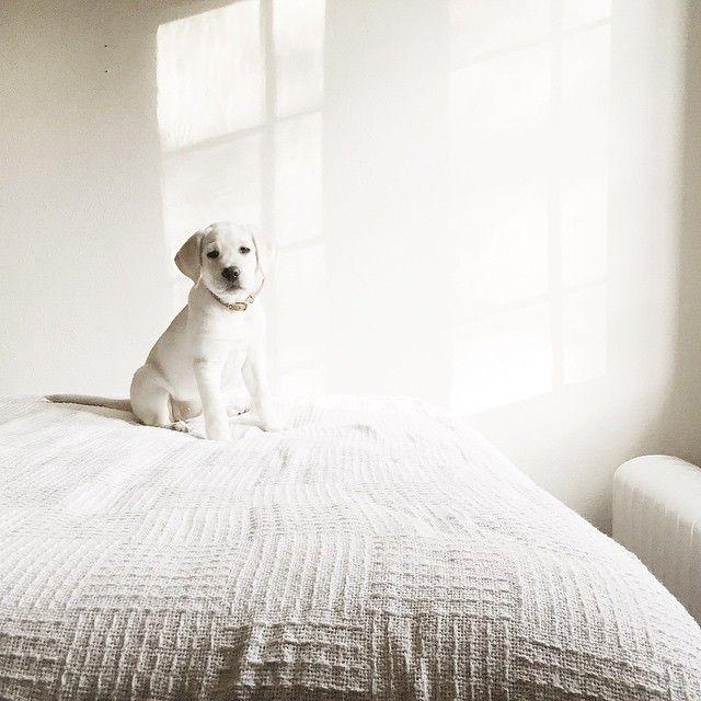 Hunderassen Bilder Kleine Hunde Kostenlos Herunterladen - Hunderassen Bilder Kleine Hunde Kostenlos Herunterladen