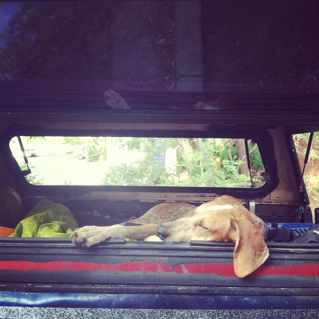 Hunderassen Bilder Kleine Hunde Kostenlos - Hunderassen Bilder Kleine Hunde Kostenlos