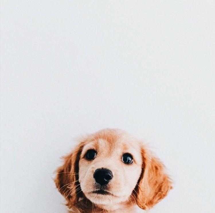 Hunderassen Bilder Kleine Hunde - Hunderassen Bilder Kleine Hunde